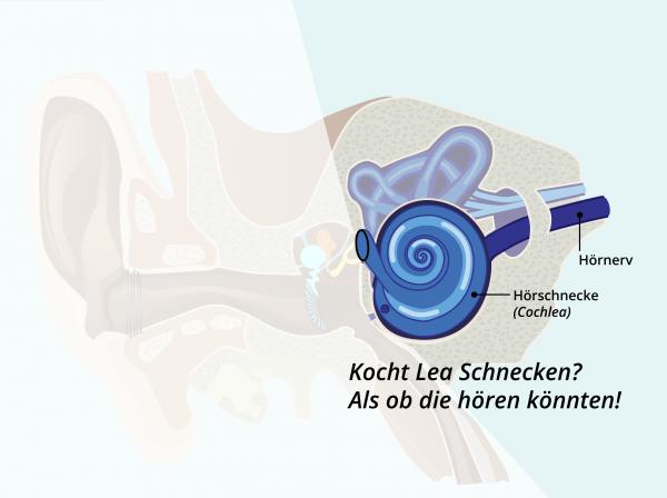 Aufbau des Ohres / Cochlea