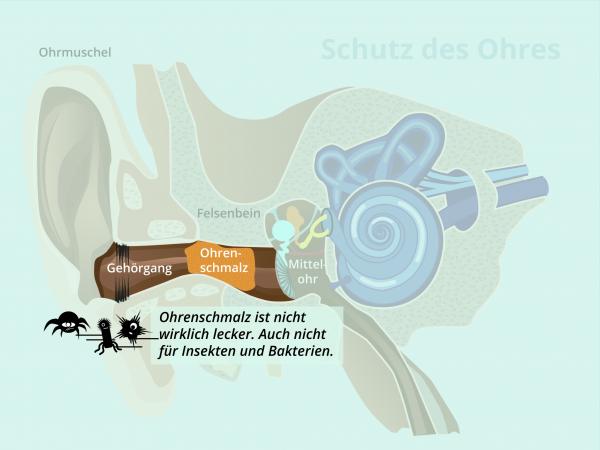 Schutz des Ohres / Ohrenschmalz